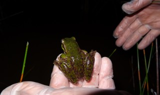 frog and biosecurity