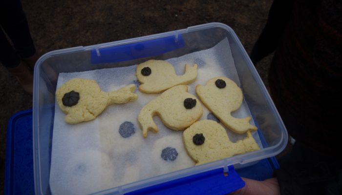 Whale Biscuits