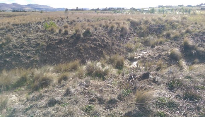 An example of tunnel erosion between Mienna park and the PWOL foreshore.